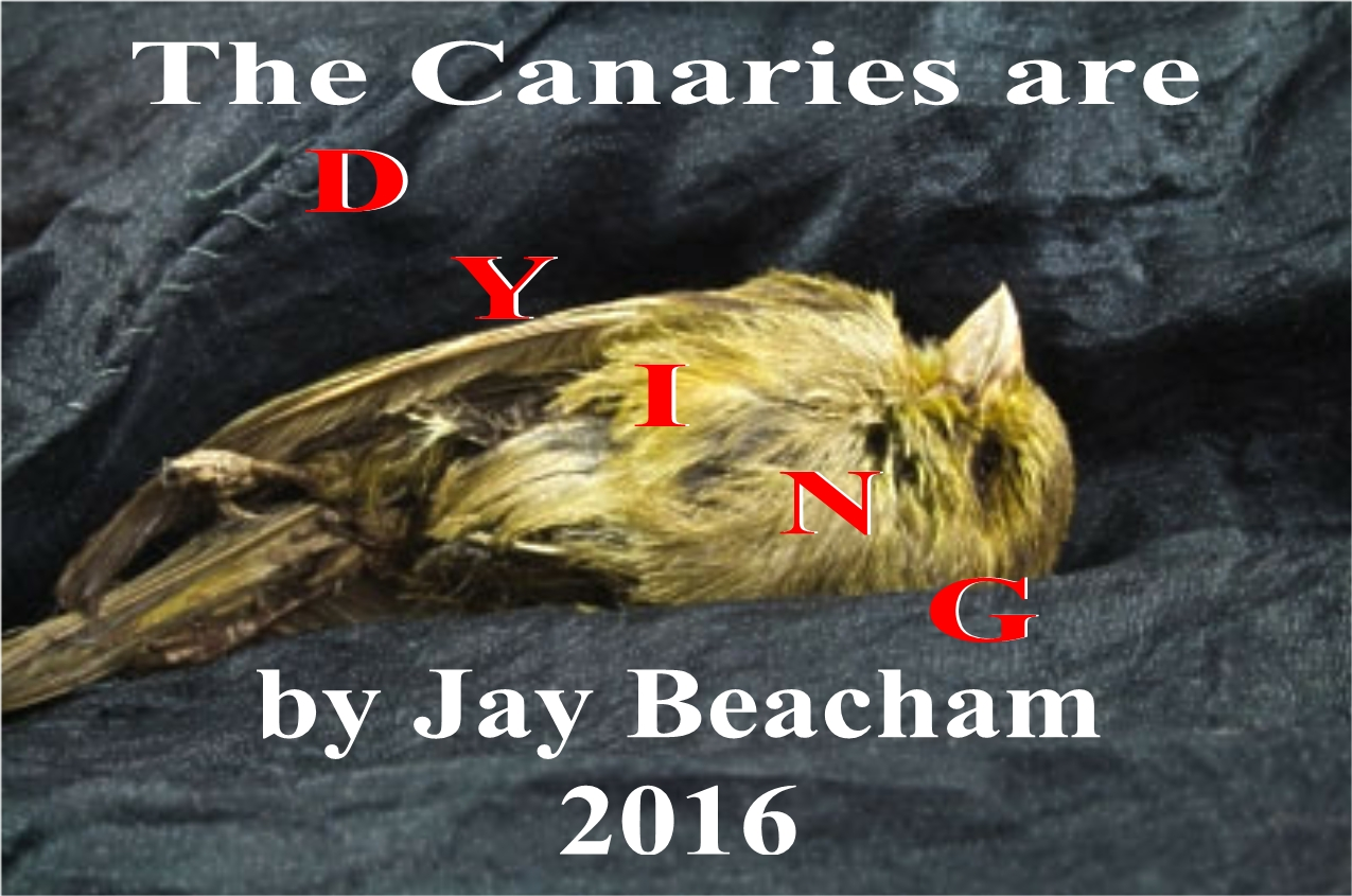canaries3