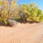 Farm trees and Road cracks Oct 2017 018