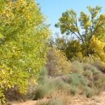Farm trees and Road cracks Oct 2017 020