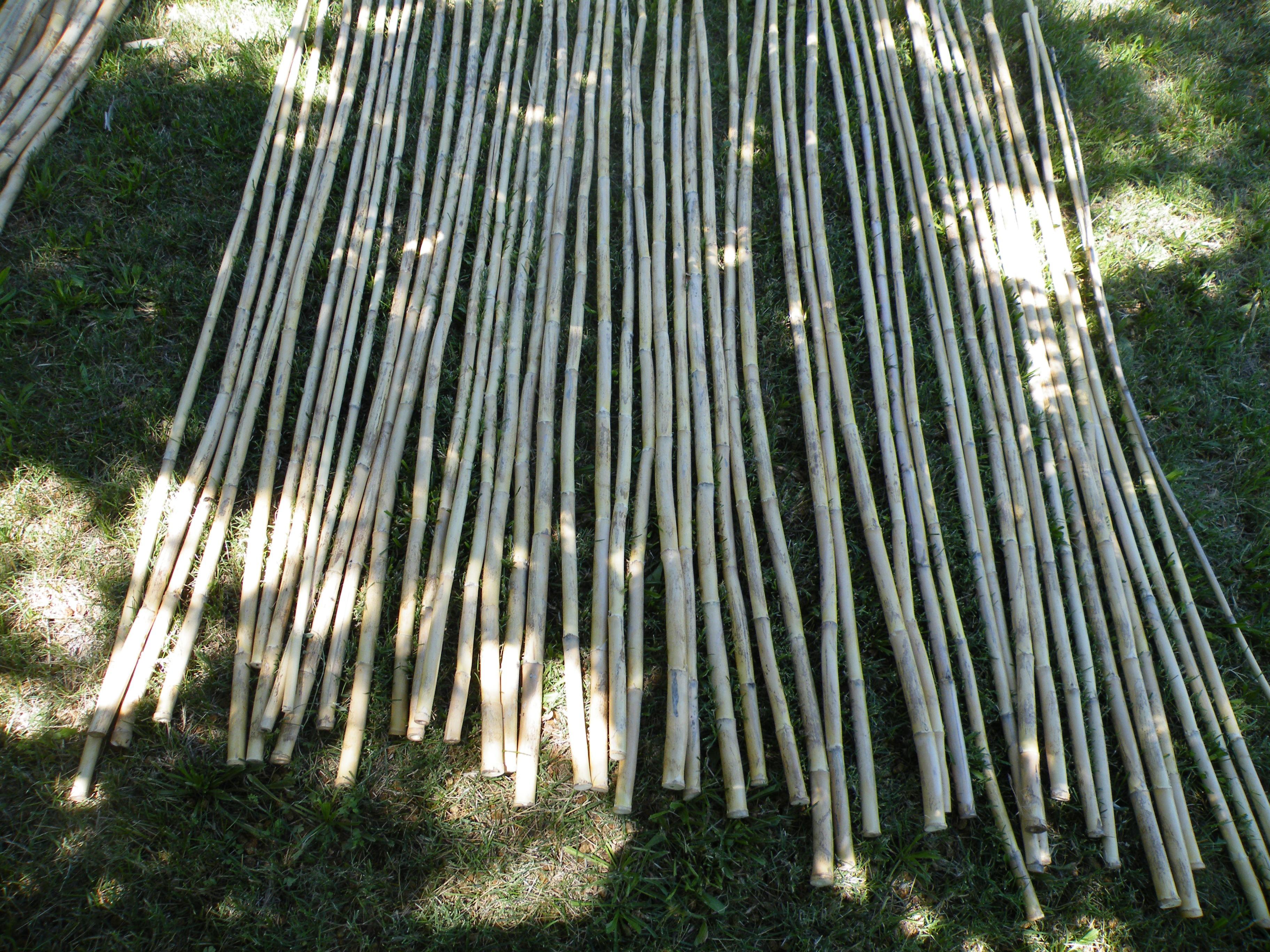 6 24 2018 cut bamboo 001